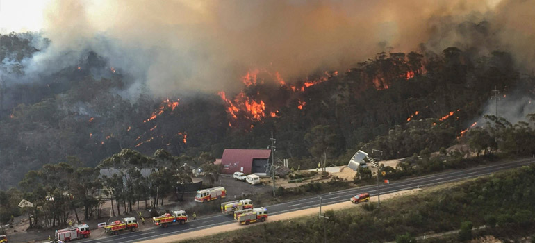 Donate to the Australia Fires Appeal